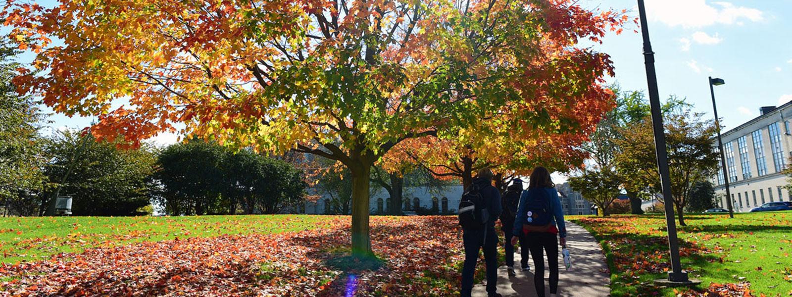 Students walking through leaves
