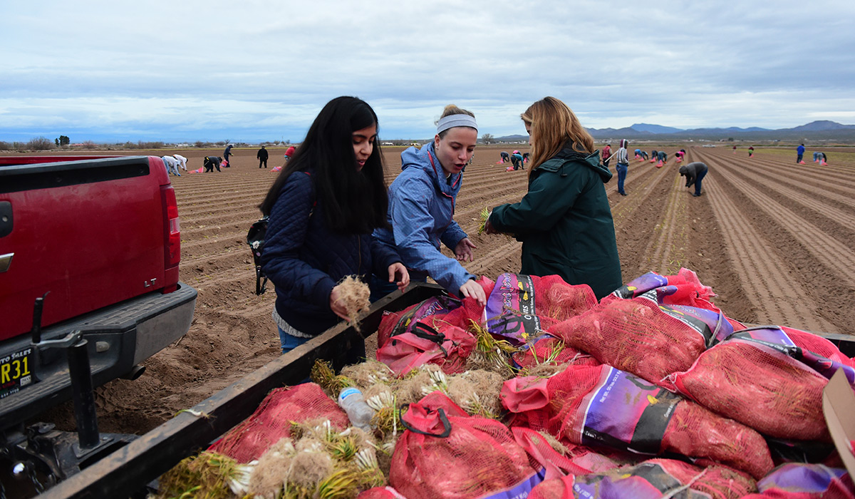 Students grabbing bags of onions off a truck.