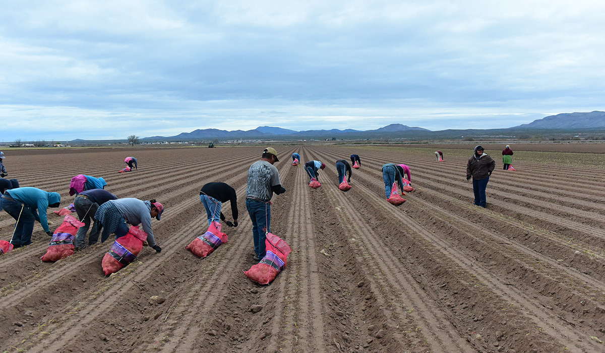 Students in the onion field