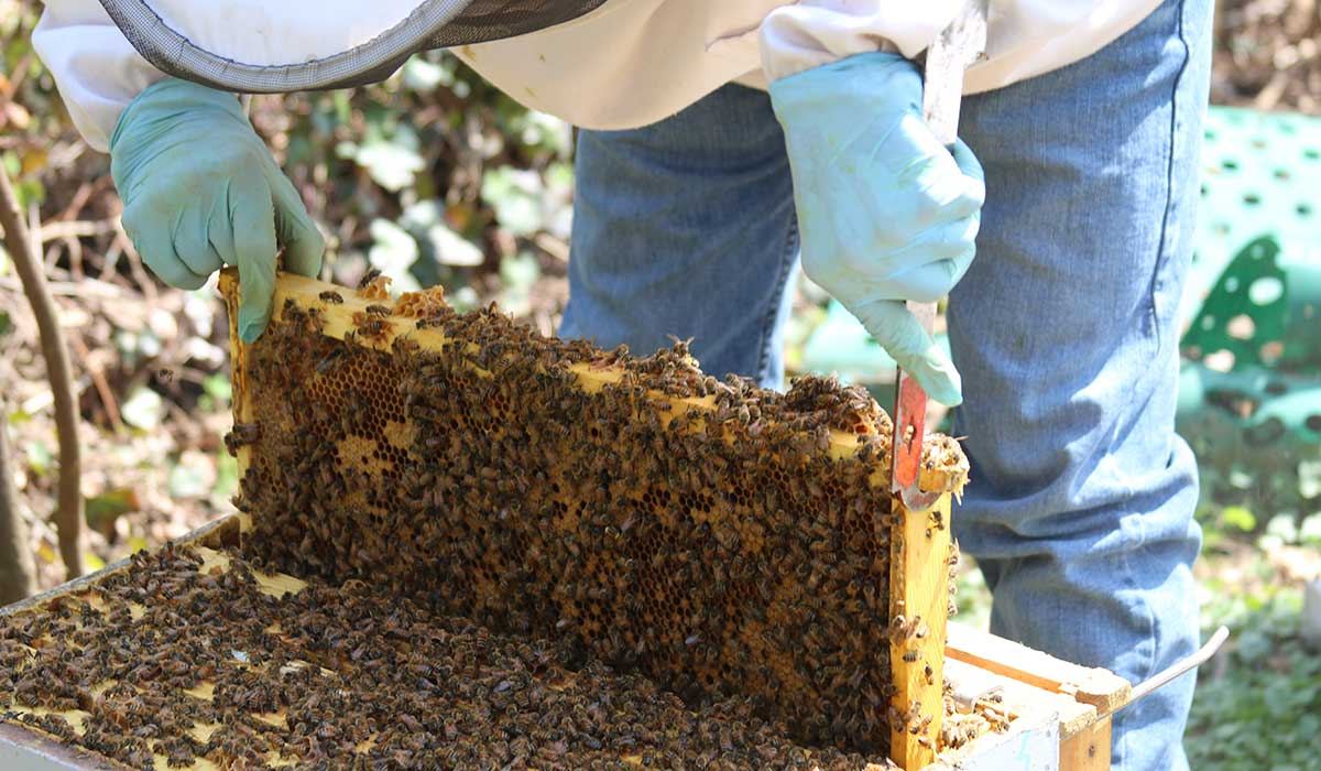 Student working with the beehive
