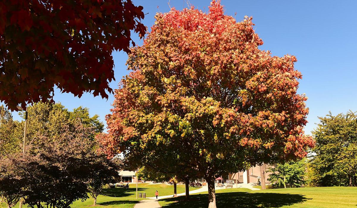 tree turning orange in fall